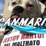 Мадрид вынес законодательный запрет на усыпление бродячих животных