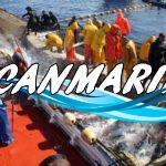 Охота на тунца